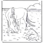 Coloriages d'animaux - Cheval et poulain