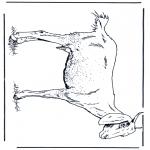 Coloriages d'animaux - Chèvre