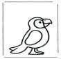 Perroquet 1