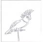 Perroquet 4