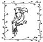 Perroquet assis sur un perchoir
