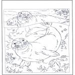 Coloriages d'animaux - Phoques