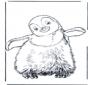 Pingouin 3