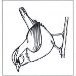 Coloriages d'animaux - Troglodyte mignon
