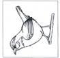 Troglodyte mignon